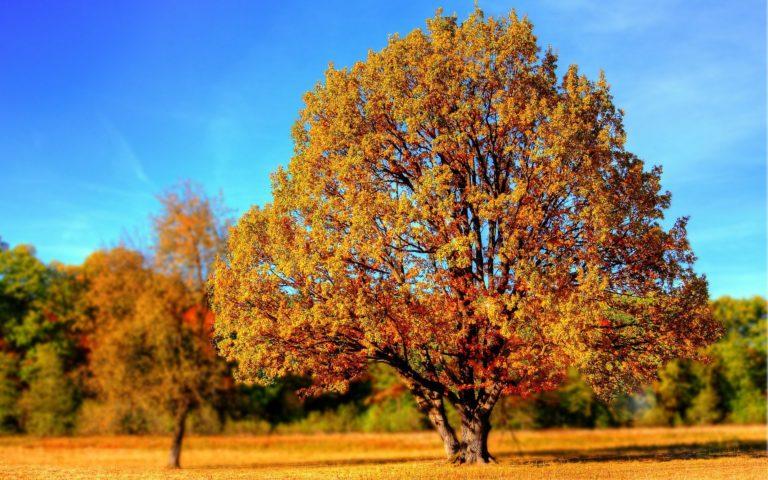 Fall Foliage Photo Hikes